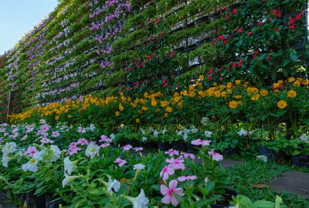 Landscaping with colorful flowers as a wall