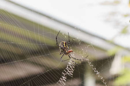 Spider on the nest,that are eating insects as food.