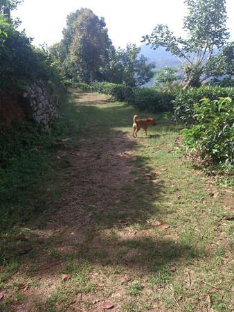 Stray dog walking on grass