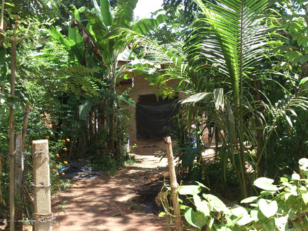 Walkway to a house surrounded by plants