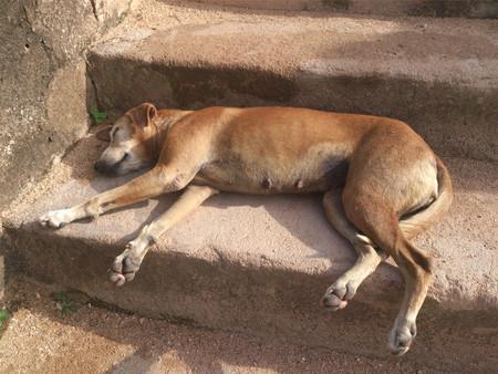 Dog sleeping on a stairs