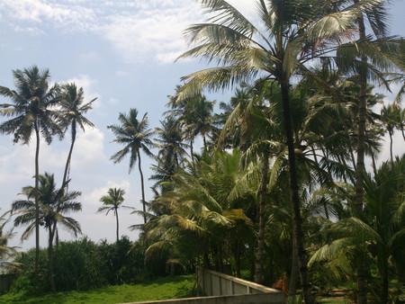 View of coconut trees Standard-Bild
