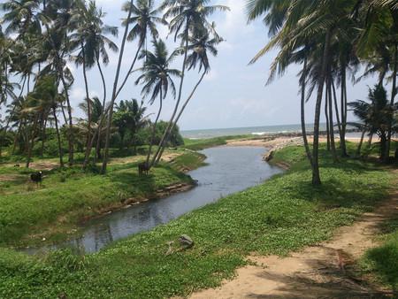 Coconut trees by an estuary Standard-Bild