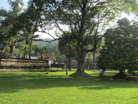 Lawn with trees Standard-Bild