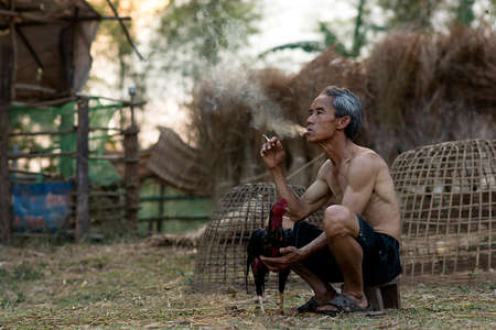 cockfighting: Asian old man smoking with Thai gamecock Countryside Lifestyle concept
