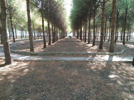 A Peaceful Walking Way Between The Trees