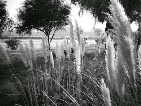 Garden Of Aden Stock Photo - 111335216