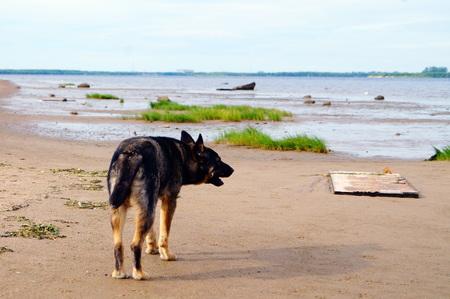 landfall: The dog on the coast