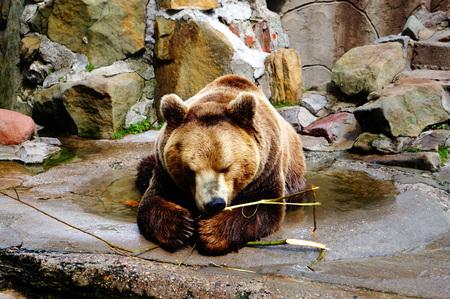 nibble: Bear