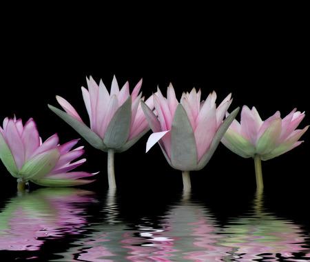 waterlilies: water-lilies