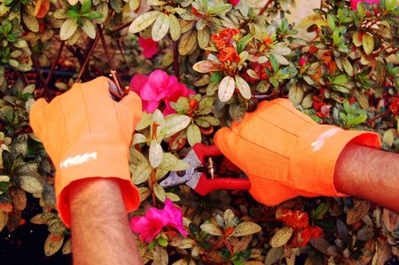 snipping: pruning