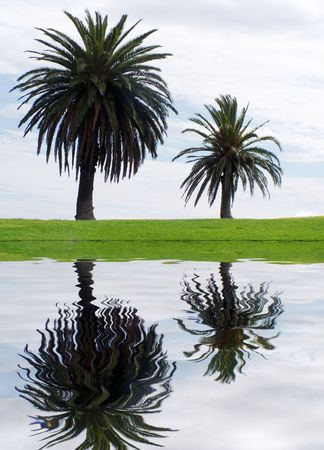 palmy: two palm trees