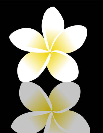 frangipani (plumeria), reflected on a black surface
