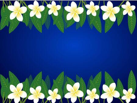 a border of frangipani flowers over blue