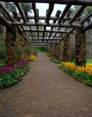 colorful tulips along  a walkway in a garden                                   Stock Photo