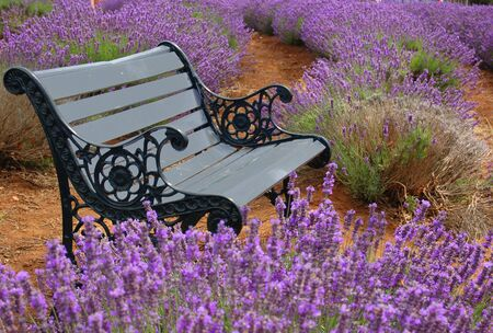 a bench in a lavender field