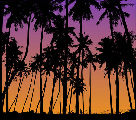 palm trees silhouette against sky at sunset