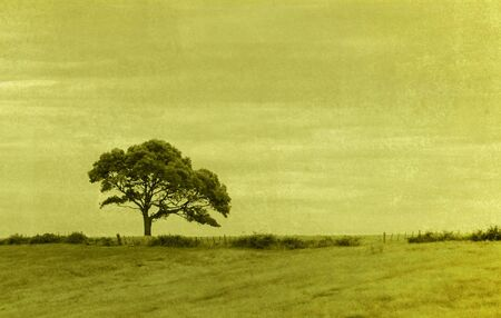 single tree in a field- grungy image