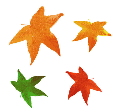 set of autumn leaves of different colors