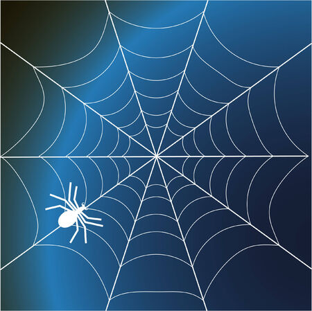 a spider and web- vector illustration