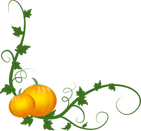 pumpkins and vine over white background