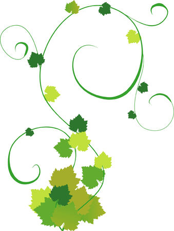 an illustration of grapevine Stock Vector - 3762557