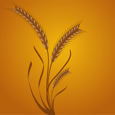 wheat ears Vector