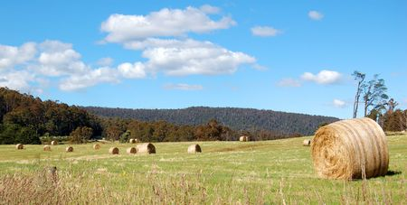 hay bales in a field Stock Photo - 3762541
