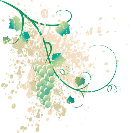 grape crop: grungy ilustraci�n de una vid