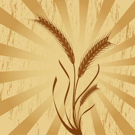 Espigas de trigo grungy más de fondo, utilizando sólo los gradientes de simple Foto de archivo - 3804122