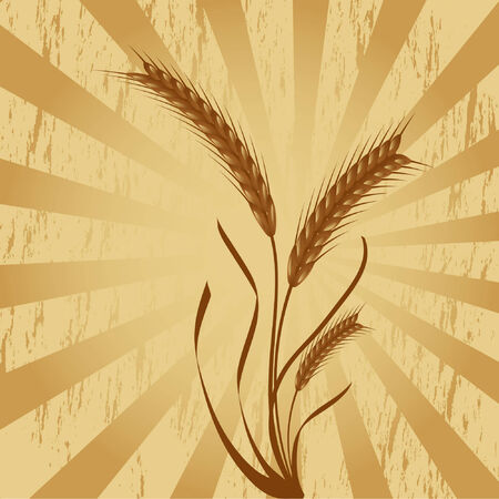 wheat ears over grungy background, made using only simple gradients Vector
