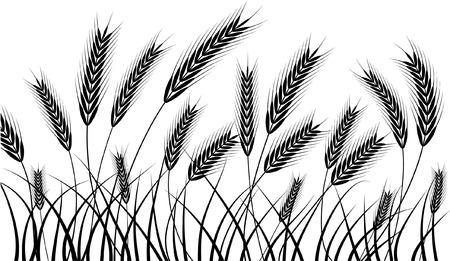 小麦の穂が収穫の準備ができてのシルエット