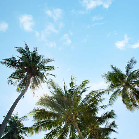 south beach: An image of nice palm trees in the blue sunny sky