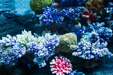 hardcoral: Image of coral on the sea floor Stock Photo