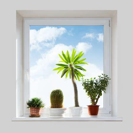 House plants on the windowsill. Spring. photo