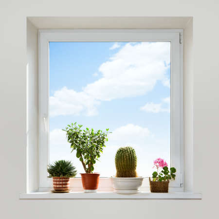 indoor plants: House plants on the windowsill. Spring.