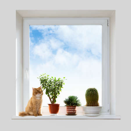 Cat and house plants on the windowsill. Spring. photo