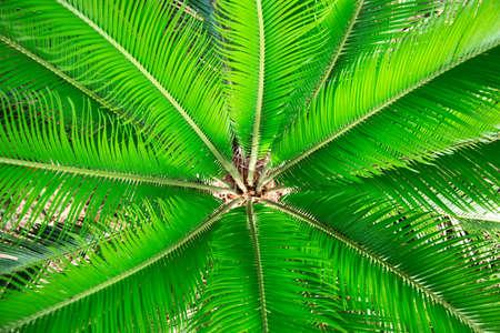 helechos: Antecedentes de follaje helechos verdes. Fondo tropical.