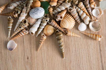 Beautiful background of sea shells and sea stones