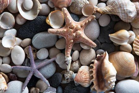 Beautiful background of sea shells and starfish Reklamní fotografie - 78453085