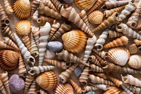 Beautiful background of sea shells and sea stones