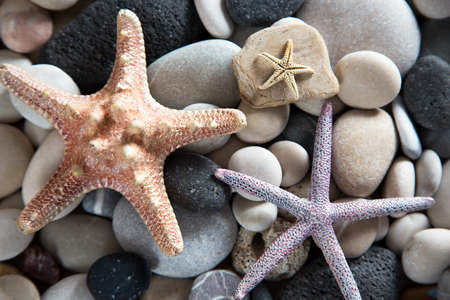 Beautiful background of sea shells and starfish Reklamní fotografie - 78452518