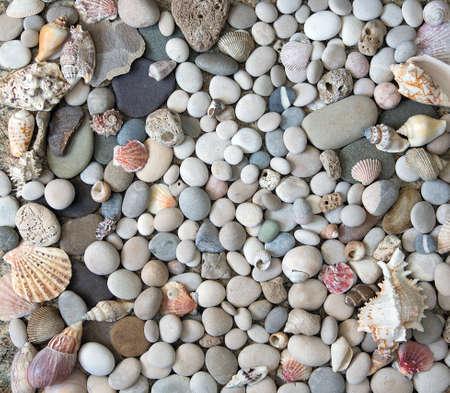 Beautiful background of sea shells and starfish Stock Photo
