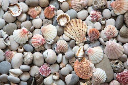 Beautiful background of sea shells and starfish Reklamní fotografie - 100433644