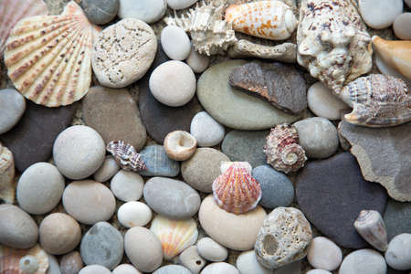 Beautiful background of sea shells and stones