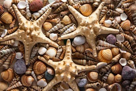 Beautiful background of sea shells and starfish Reklamní fotografie