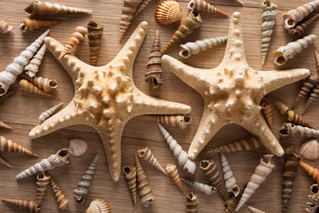 Beautiful background of sea shells and starfish Reklamní fotografie - 105508118
