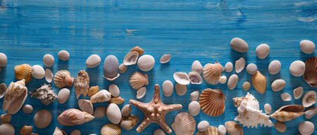 Beautiful background of sea shells and starfish on a blue background