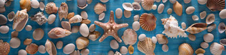 Beautiful background of sea shells and starfish on a blue background. Horizontal panorama