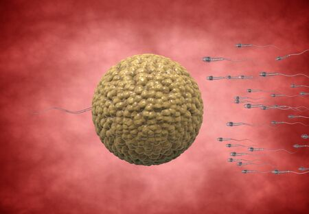 animal sex: sperm. Spermatozoons, floating to ovule. egg cell - 3d render Stock Photo